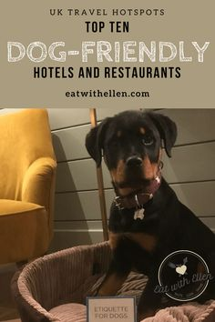 Top ten dog-friendly hotels and restaurants My favourite places to stay and eat, with the dog, in the UK Dog Friendly Hotels Uk, Uk Holidays, Weekend Breaks, Dog Travel, Top Ten, Dog Friends, I Love Dogs, Your Pet, Dog Lovers