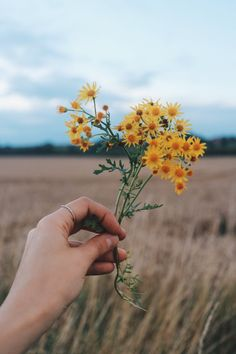Why I Don't Share Everything — Field and Nest Hand holding flowers Yellow Flowers, Wild Flowers, Beautiful Flowers, Bouquet Flowers, Spring Flowers, Aesthetic Drawing, Flower Aesthetic, Hands Holding Flowers, Hand Holding