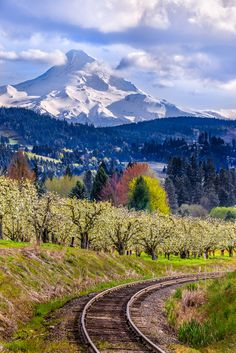 Hood River Valley, Oregon. I would like to go some day.