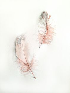 Ballet Feathers