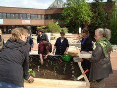 Pflanzaktion - Urban Gardening auf dem Museumsvorplatz am Schölerberg erfolgreich gestartet!