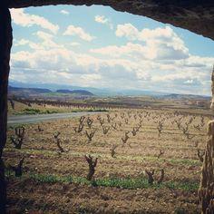 Viñedos de Rioja vistos desde un guardaviñas #Enoturismo #Rioja
