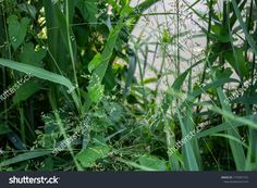 Different types of green grasses Different Types, Grasses, Green Grass, Herbs, Plants, Photography, Image, Lawn, Photograph