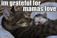 I,m grateful for mamas love