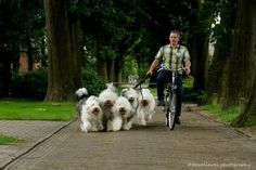 bike tourwith six old english sheepdogs... with Arie Bloemendal... picture Cees Bol