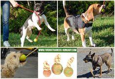 Zsinóron lógó, 5-7 cm-er átmérőjű kemény labda kutyák számára. A labda biztonságos anyagból készül, sokoldalú és praktikus játék, amely 80%-ban jó minőségű kaucsukból áll, így hosszabb játékoknál és képzéseknél is használható. #dogtoy #labda #kutyajáték #kutyabolt #magyarkutya Goats, Animals, Animales, Animaux, Animal, Animais, Goat