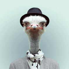 http://www.zooportraits.com/post/46329567454/ostrich-by-yago-partal-for-zoo-portraits