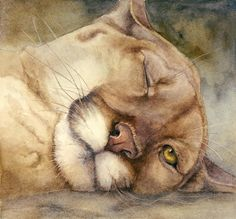 Cougar    I See You     Painting by Bonnie Rinier