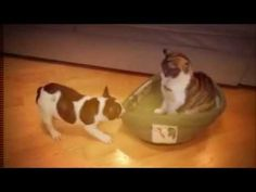 Funny Cats and Dogs Playing with Each Other -  #animals #animal #pet #cat #cats #cute #pets #animales #tagsforlikes #catlover #funnycats  Learn how to speak cat! Click HERE for the cat bible! Dogs and cats really do love each other and this video proves it. Please feel free to … The cutest cats  - #Cats