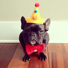 party hats & bulldogs & bowties