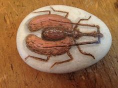 Hand-Painted+River+Rock+From+Thailand+Bug+Beetle+Brown+-+Entomology+Art++