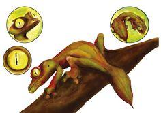 Gecko cola de hoja - Jean Carlo Martinez Barrera