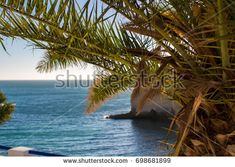 Date palm on the background of the Atlantic Ocean. Beach in Carvoeiro, Algarve, Portugal. View from the top
