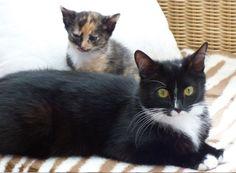 Lotte und Frida