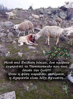 Animal Cruelty, Greek Quotes, Polar Bear, Pet Birds, Animal Kingdom, Dog Lovers, Best Friends, Cute Animals, Sayings