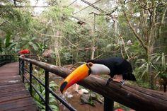Parque das Aves - Foz do Iguaçu, Paraná