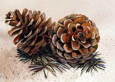 Art of Mary Gibbs: