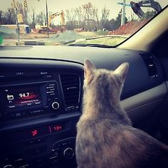 Hey I think I like this car riding thing. {X-Pro II filter} April Photo Challenge, Filter, Adoption, Challenges, Cats, Fun, Animals, Foster Care Adoption, Gatos