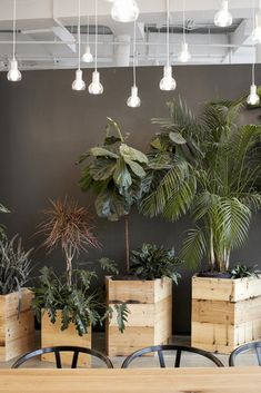 Beautiful Indoor Plants Design in Your Interior Home The best plants for your office. Plants that will not die on your workdesk in your office. For more office designing concepts or interior plant pointers. Best Office, Small Office, Luxury Master Bathrooms, Master Baths, Rustic Bedroom Furniture, Pot Plante, Indoor Plant Pots, Rustic Restaurant, Big Plants
