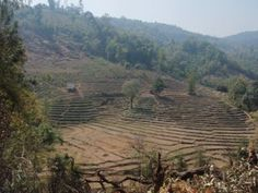 out of use rice paddies