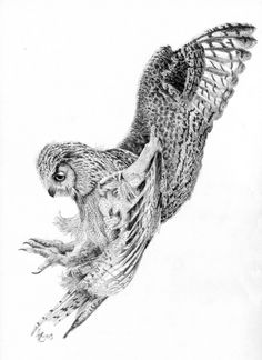 Eagel owl drawing - Graphite pencil drawing of an Eagle Owl about to attack by Hannah Blowes from a photo taken at the English School of Falconry