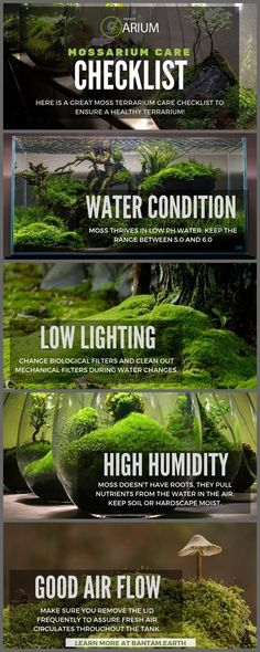 "Mossarium: Complete Care Guide & ""How To"" Build - Ideas for home wedding Terrarium succulentes Build A Terrarium, Terrarium Plants, Growing Moss, Paludarium, Vivarium, Planted Aquarium, Plantation, Water Garden, Fish Tank"