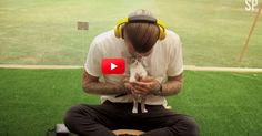 What Do You Get When You Put Unsuspecting Stressed Out People In A Box With Kittens? Pure Magic! | The Animal Rescue Site Blog