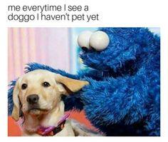 Doggo is love, doggo is life