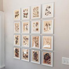 Botanical prints for the back porch