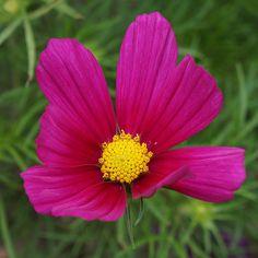 Kaunis kukka matkan varrelta.
