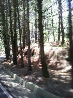 Ya cerca de Valle, la tierra colorada, las agujas secas de los pinos en el suelo y ellos al pie de la carretera.