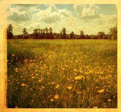 Springtime. Poland