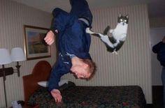 Cat Norris!!!  #funny #cat