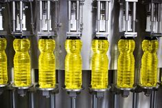 Production of Vegetable Oil
