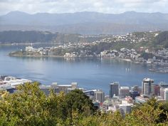 view from Te Ahumairangi Hill lookout, Wellington, New Zealand