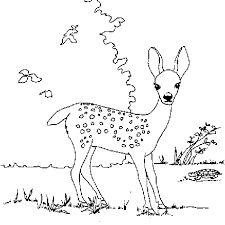 Free Deer Coloring Page Pages 1 Printable