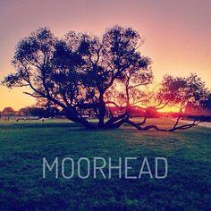 Pretty view of the #cordmn Crazy Tree via @Patricia Smith Smith Smith Smith Nickens Derryberry Fargo-Moorhead