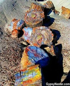 Broken petrified log found in Petrified Forest National Park in AZ
