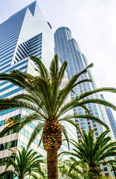 Los Angeles Skyline and Palms - From our tour https://friendlylocalguides.com/los-angeles/tours/2-days-in-los-angeles #skyline #palms #architecture #financial #district #travel #la #california #street #visit #losangeles #usa #city #friendlylocalguides