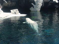 Albino Whale | Albino Whale | Flickr - Photo Sharing!