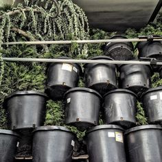 Flowers & Plants #trucking #truckinglife #truckersjourney #roadlife #plants