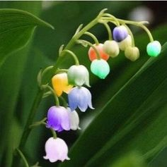 Hey, I found this really awesome Etsy listing at https://www.etsy.com/listing/215349188/rainbow-color-lily-flower-seeds-bell