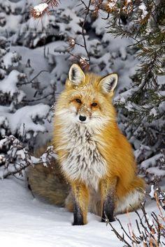 Wonderful creature!