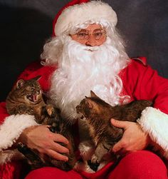 Santa with cats