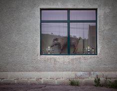 romania-villages-quirky-photography-hajdu-tamas-22