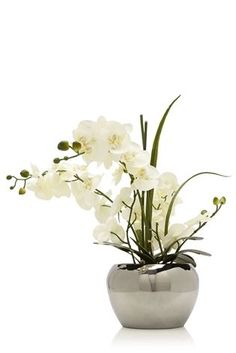 Buy Orchid In Silver Ceramic Pot from the Next UK online shop
