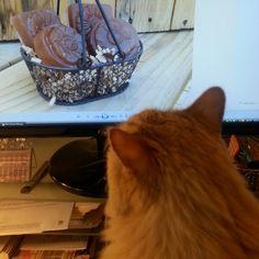 Assistant Sunny Bunny checking the latest post. Sandalwood mini soap basket. Www.etsy.com/shop/sunnybunnygardens