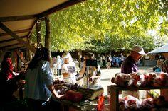 Growers' Market - Black Barn Vineyards - Hawkes Bay, New Zealand Underground Cellar, Bay News, Black Barn, New Zealand, Wines, Vineyard, Marketing, Hot, Vine Yard