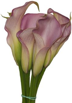 Calla lillies Pictures Of Calla Lilies, Calla Lily Flowers, Flowers Nature, Types Of Flowers, Love Flowers, Beautiful Flowers, Wedding Flowers, Zantedeschia, Love Lily