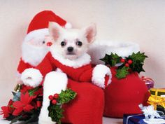 dog santa - Google Search